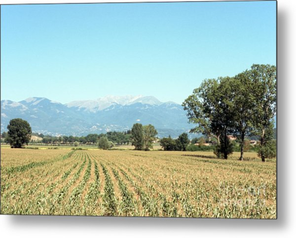 Corn Field With Terminillo Mount Metal Print