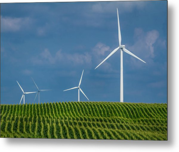 Corn Rows And Windmills Metal Print