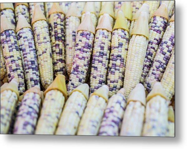 Corns  Metal Print