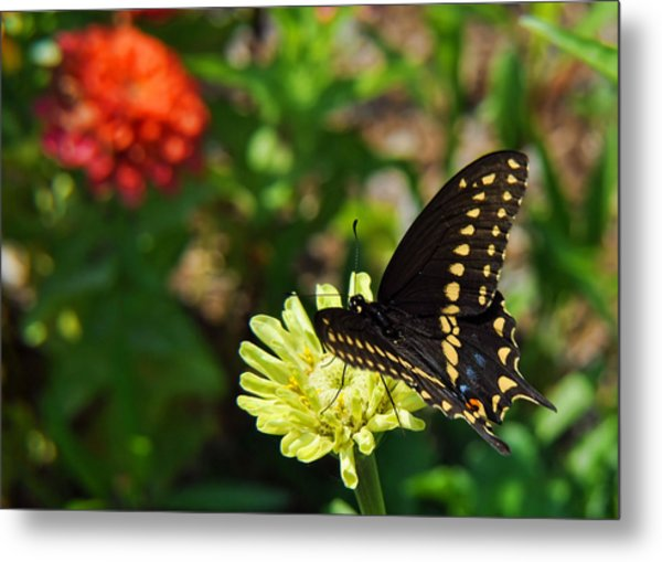 Corolla Garden Metal Print by JAMART Photography