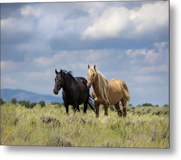 Metal Print featuring the photograph Corona And Em Of Sand Wash Basin by Nadja Rider