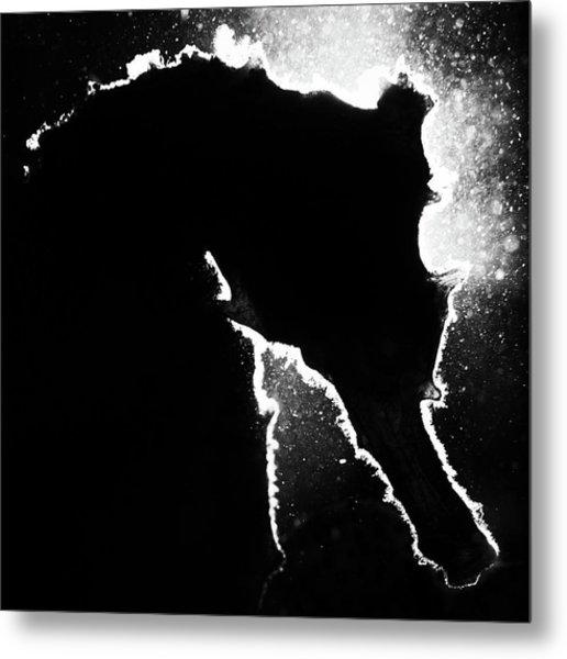 Cortez Seahorse Metal Print