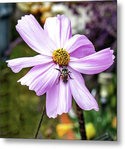 Cosmos And The Bee Metal Print