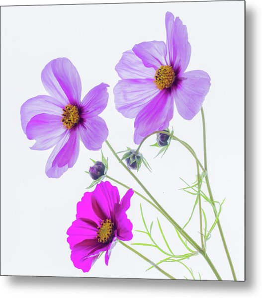 Cosmos Bright Metal Print
