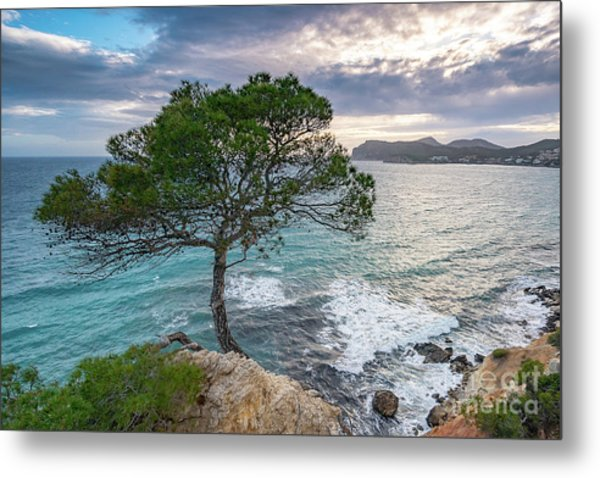 Costa De La Calma Tree Metal Print