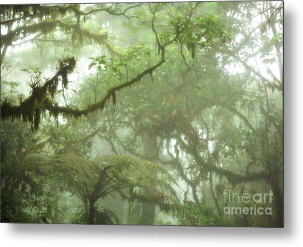 Costa Rican Cloud Forest Metal Print by Matt Tilghman