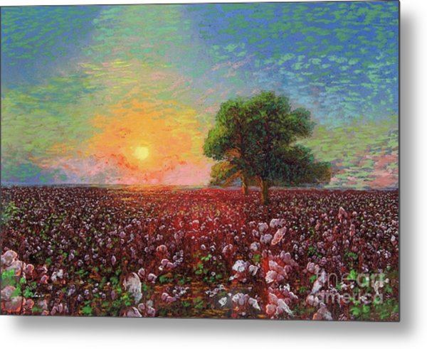 Cotton Field Sunset Metal Print