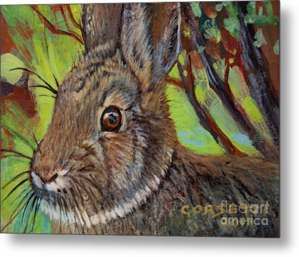 Cotton Tail Rabbit Metal Print