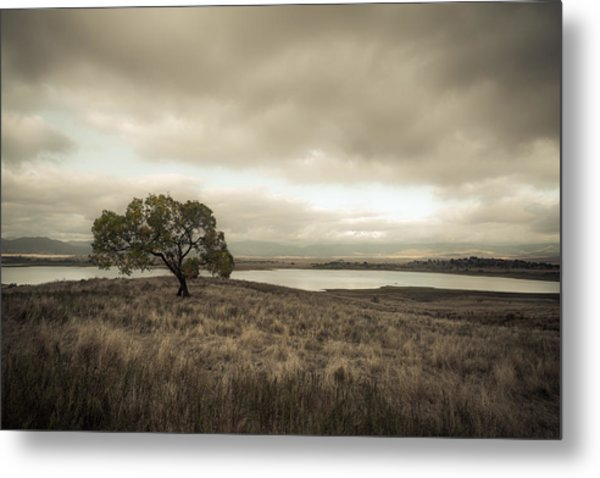 Cottonwood In October Metal Print