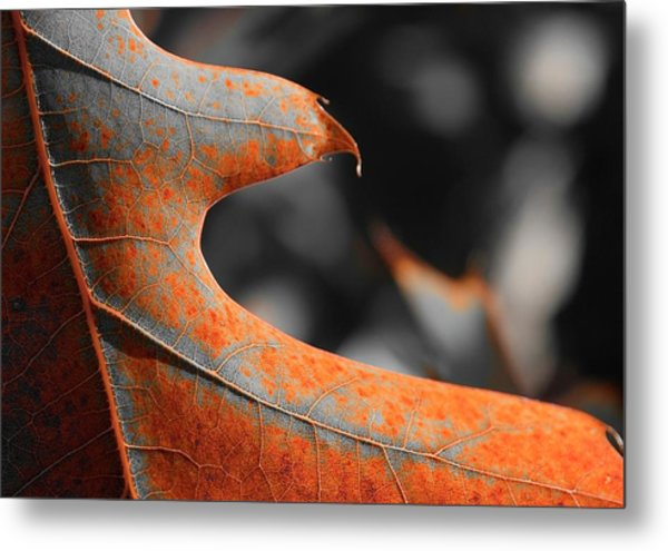 Cougar Rusty Leaf Detail Metal Print