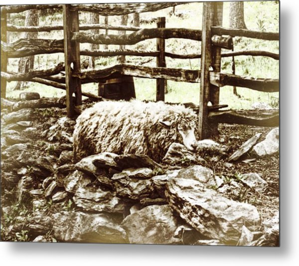 Counting Sheep Metal Print by JAMART Photography