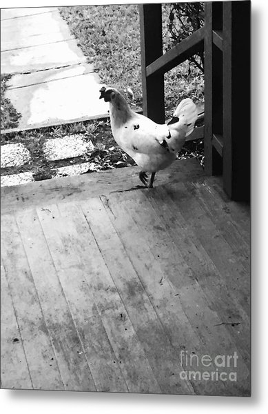 Country Chicken Metal Print
