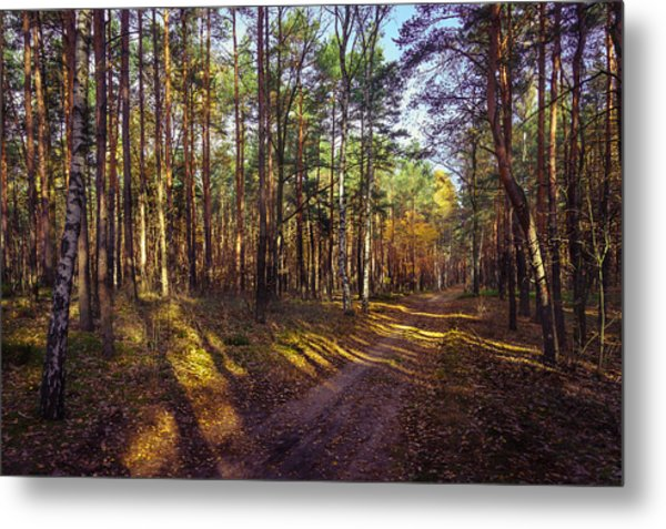 Country Road Through The Forest Metal Print