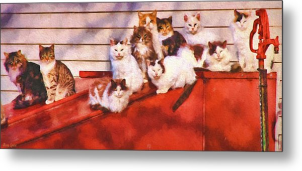 Countryside Cats Metal Print