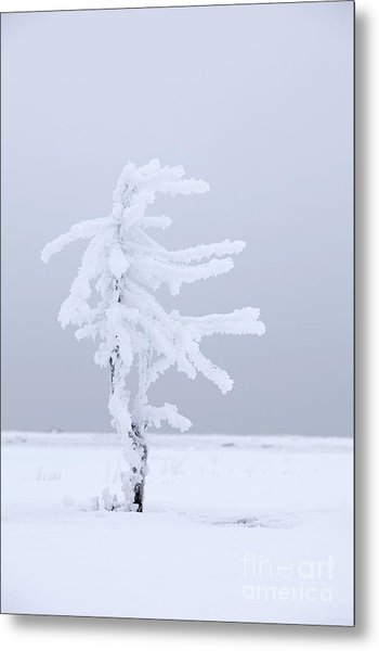 Covered In Frost Metal Print by Tim Grams
