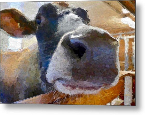 Cow Face Close Up Metal Print
