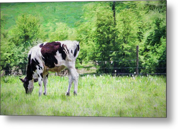 Cow Grazing Metal Print