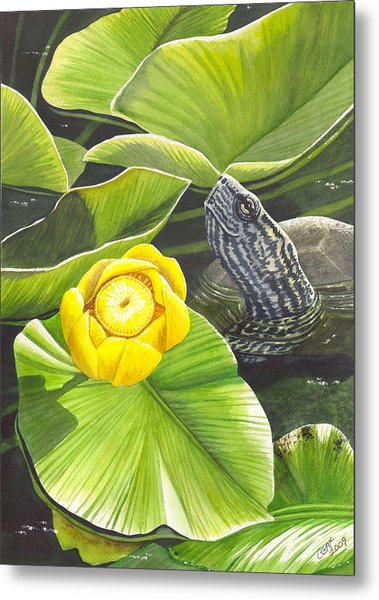 Cow Lily Metal Print by Catherine G McElroy