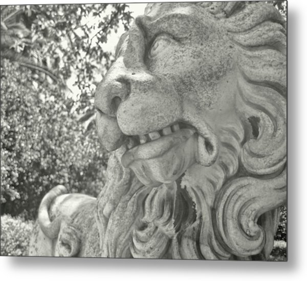 Cowardly Lion Metal Print by JAMART Photography