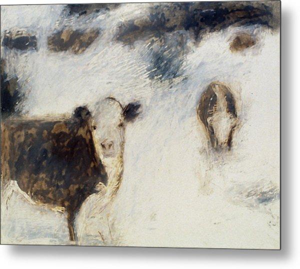 Cows In Snow Metal Print by Ruth Sharton