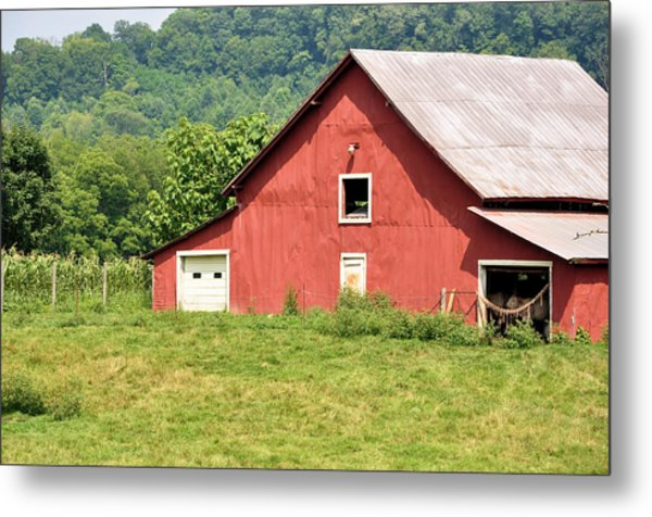 Cows In The Barn Metal Print by Jan Amiss Photography