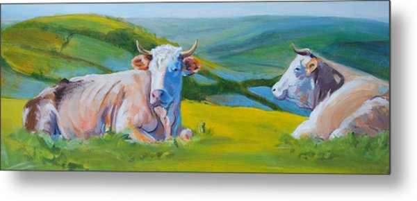 Cows Lying Down In Devon Hills Metal Print