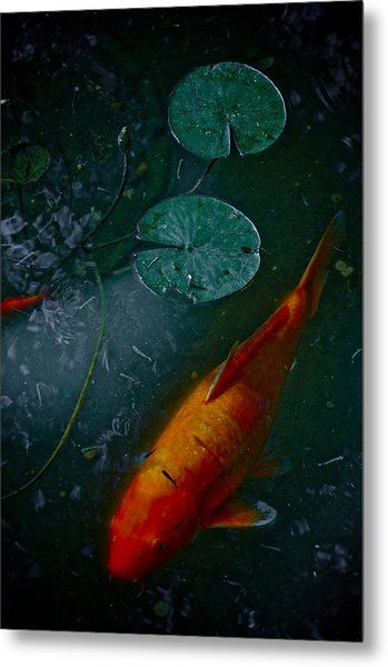 Coy Number One Metal Print