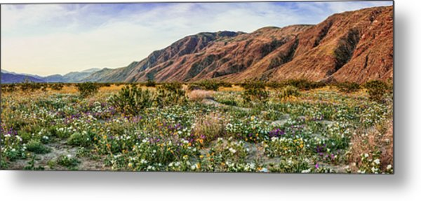 Coyote Canyon Sweet Light Metal Print