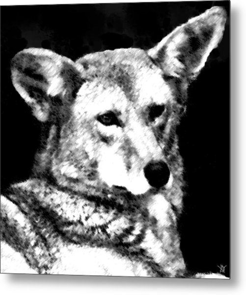 Coyote Charcoal Metal Print by Debra     Vatalaro