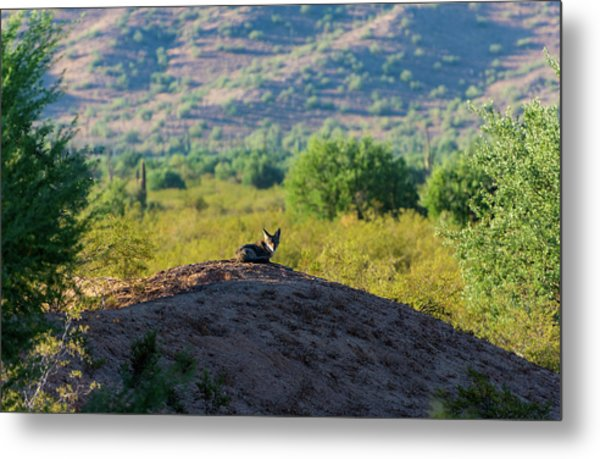 Coyote Hill Metal Print