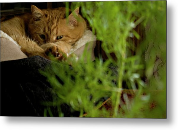 Cozy Cat Metal Print
