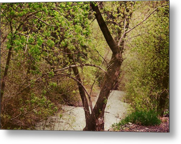 Cozy Stream In American Fork Canyon Utah Metal Print