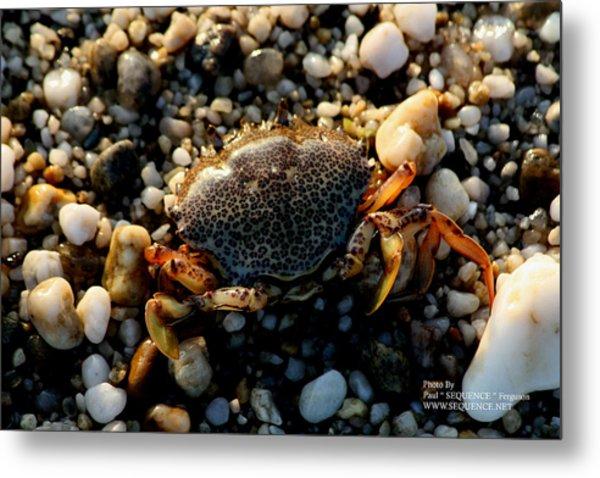 Crab On The Beach Metal Print