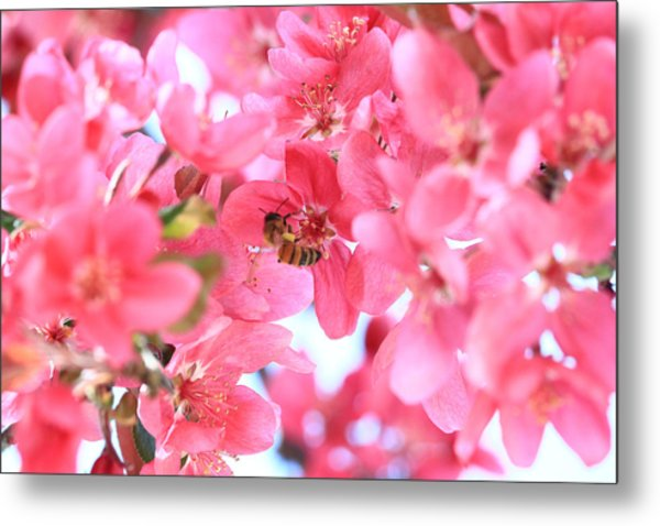 Metal Print featuring the photograph Crabapple Bees 2 by Rick Morgan
