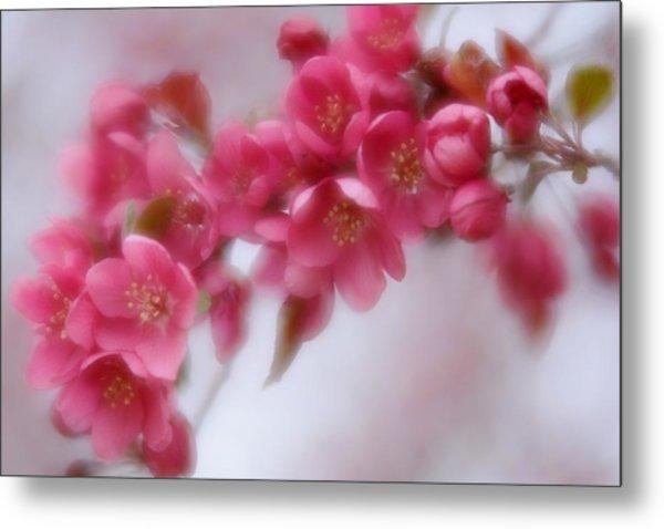 Crabapple Blossom - Dark Pink Metal Print
