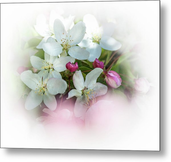 Crabapple Blossoms 3 - Metal Print