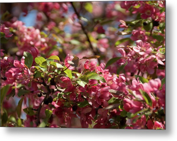 Crabapple In Spring Section 4 Of 4 Metal Print