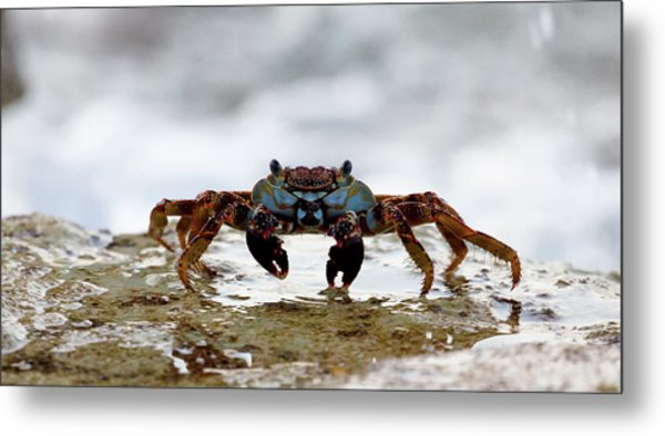 Metal Print featuring the photograph Crabby by David Buhler