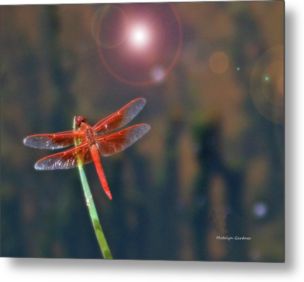 Crackerjack Dragonfly Metal Print