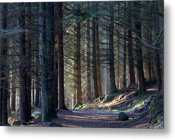 Craig Dunain - Forest In Winter Light Metal Print