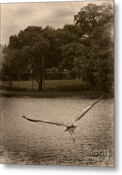 Crane In Flight Metal Print