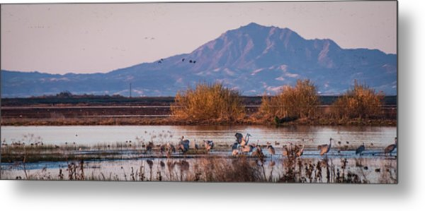 Cranes In The Morning Metal Print