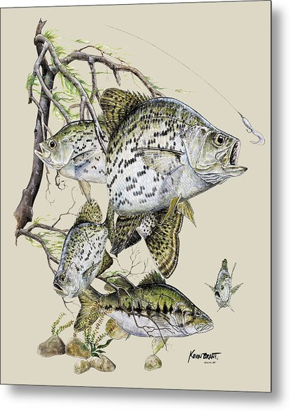Crappie And Bass Metal Print