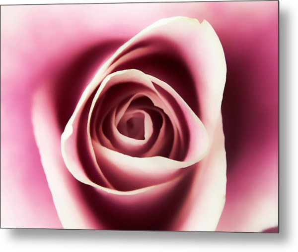 Creamy Pink Metal Print
