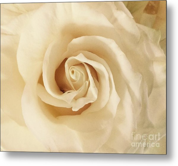 Creamy Rose Metal Print