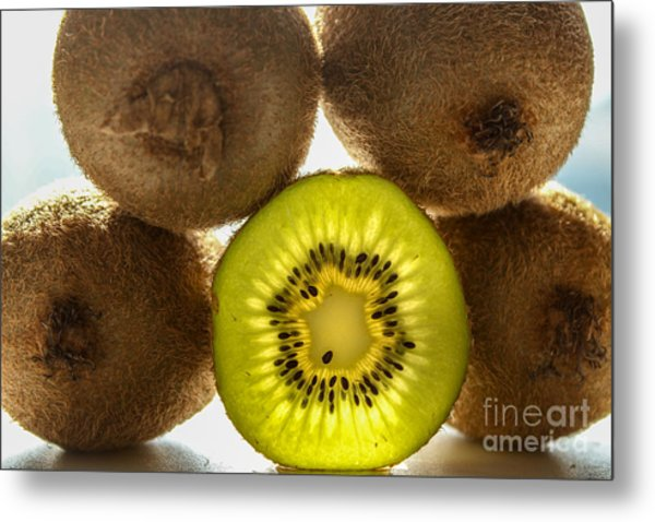 Creative Kiwi Light Metal Print