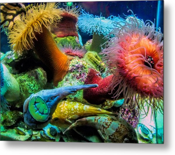 Creatures Of The Aquarium Metal Print