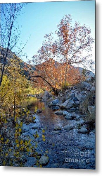 Creek At Sabino Canyon Metal Print
