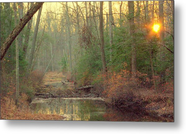 Creek Bed Metal Print