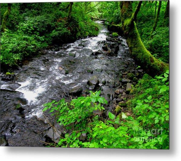 Creek Flow Metal Print by PJ  Cloud